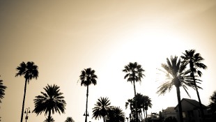 California palm trees with sunset sky