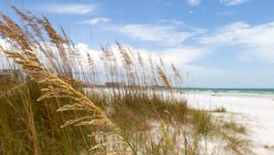 Focus on grasses by sandy beach