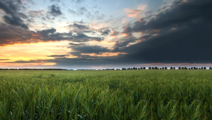 Landscape with green field and sunset
