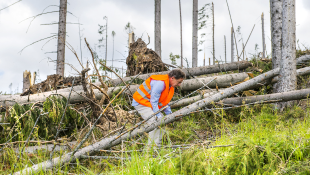 Construction worker dealing with fallen trees from storm damage