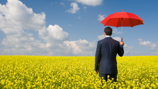 Businessman holding red umbrella in yellow meadow
